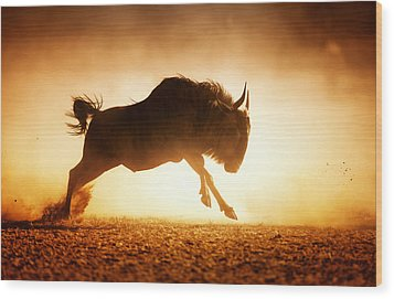 Blue Wildebeest Running In Dust Wood Print by Johan Swanepoel