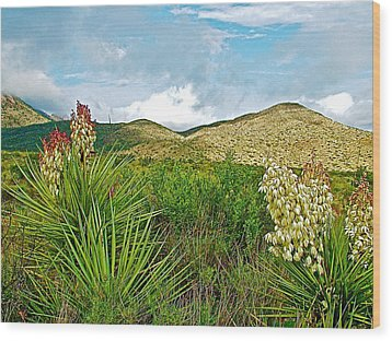 Blue Yucca And Chisos Mountains In Big Bend National Park-texas Wood Print