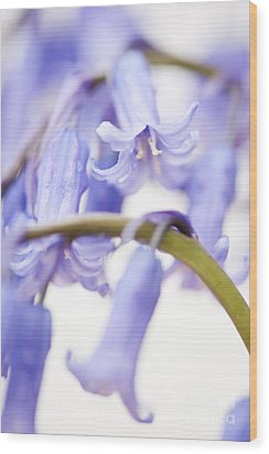 Bluebell Abstract Iv Wood Print by Anne Gilbert