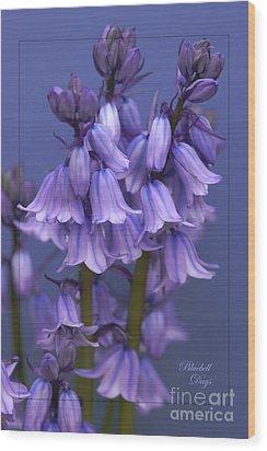 Bluebell Days Wood Print
