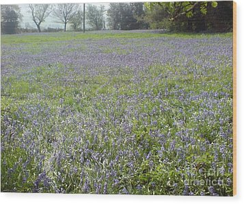 Bluebell Fields Wood Print by John Williams