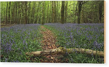 Bluebell Woods Wood Print by Peter Skelton