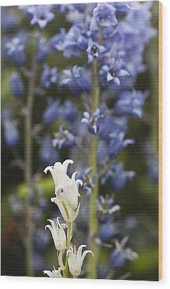 Bluebells 1 Wood Print by Steve Purnell
