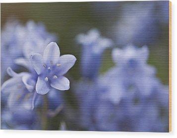 Bluebells 3 Wood Print by Steve Purnell