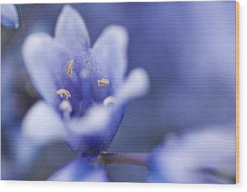 Bluebells 5 Wood Print by Steve Purnell