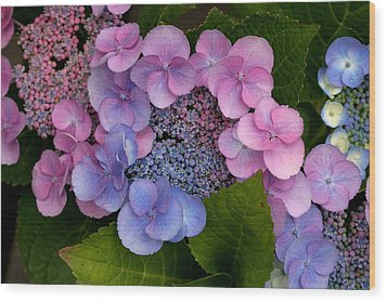 Blueberries And Cream Wood Print by Living Color Photography Lorraine Lynch