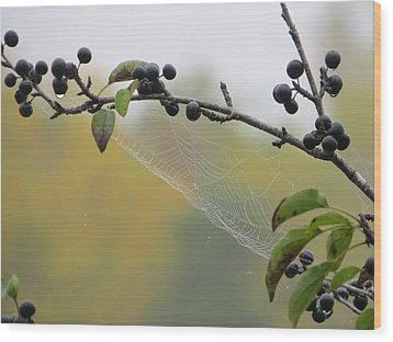 Wood Print featuring the photograph Blueberry Web by Nikki McInnes