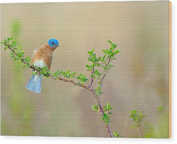 Bluebird Breeze Wood Print