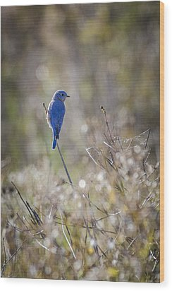 Bluebird Meadow Wood Print