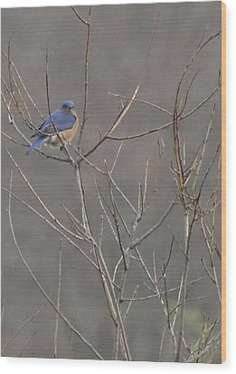 Bluebird On A Branch Wood Print