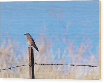 Bluebird On A Post Wood Print by Mike  Dawson