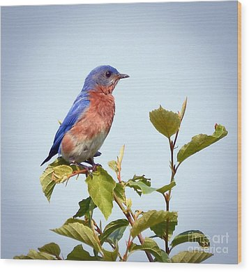 Wood Print featuring the photograph Bluebird On Top by Kerri Farley