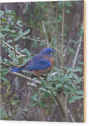Wood Print featuring the photograph Bluebird by Patricia Schaefer