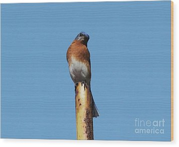 Bluebird Wood Print by Theresa Willingham