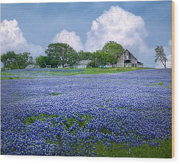 Bluebonnet Farm Wood Print by David and Carol Kelly