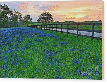 Bluebonnet Fields Forever Brenham Texas Wood Print
