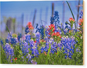 Wood Print featuring the photograph Bluebonnet Paintbrush Texas  - Wildflowers Landscape Flowers Fence  by Jon Holiday