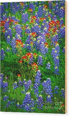Bluebonnet Patch Wood Print by Inge Johnsson