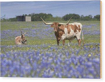 Bluebonnet Pictures - Longhorns In Bluebonnets 5 Wood Print by Rob Greebon
