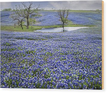 Bluebonnet Pond Wood Print by David and Carol Kelly