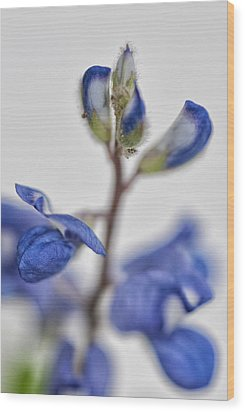 Wood Print featuring the photograph Bluebonnet by Susan D Moody