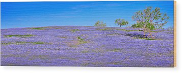 Wood Print featuring the photograph Bluebonnet Vista Texas  - Wildflowers Landscape Flowers  by Jon Holiday