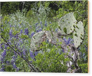 Bluebonnets And Cactus Wood Print by Ron Grafe