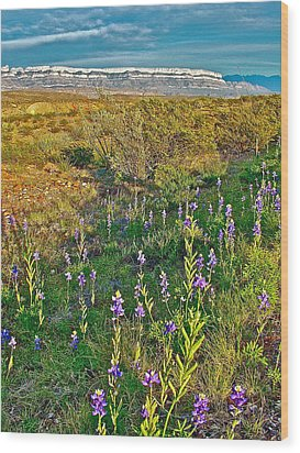 Bluebonnets And Creosote Bushes In Big Bend National Park-texas Wood Print by Ruth Hager