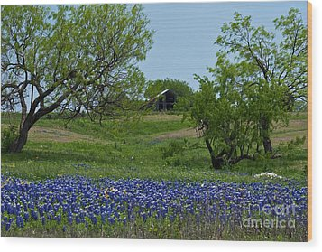 Bluebonnets And Old Barn Wood Print by Lisa Holmgreen