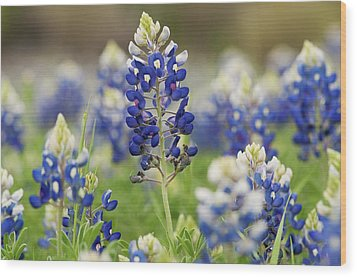 Wood Print featuring the photograph Bluebonnets by John Maffei
