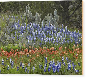 Bluebonnets Paintbrush And Prickly Pear Wood Print by Tim Fitzharris