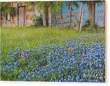 Bluebonnets Swaying Gently In The Wind - Brenham Texas Wood Print