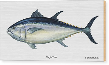 Bluefin Tuna Wood Print by Charles Harden