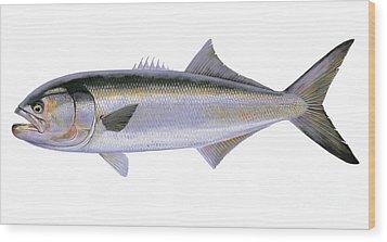 Bluefish Wood Print by Carey Chen