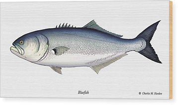 Bluefish Wood Print by Charles Harden
