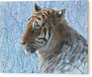 Bluegrass Tiger Wood Print