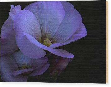Wood Print featuring the photograph Bluepink by Ivete Basso Photography
