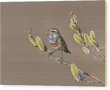 Bluethroat Wood Print