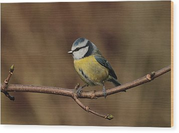 Bluey Wood Print by Peter Skelton
