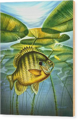 Wood Print featuring the painting Blugill And Lilypads by Jon Q Wright