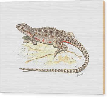 Blunt-nosed Leopard Lizard  Wood Print by Cindy Hitchcock