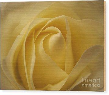 Blushing Cream Rose  Wood Print