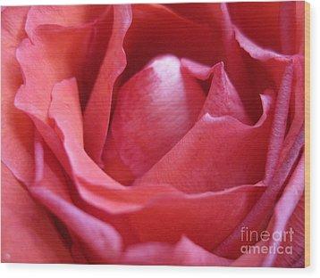 Blushing Pink Rose Wood Print