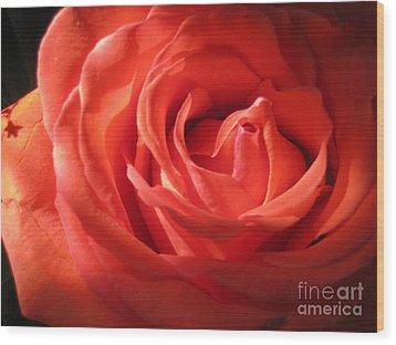 Blushing Orange Rose 1 Wood Print