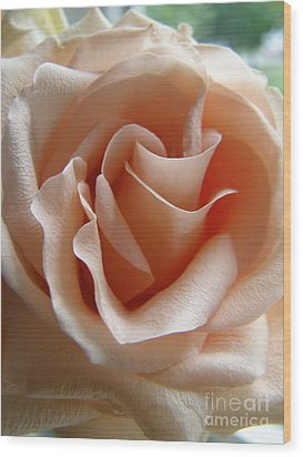 Wood Print featuring the photograph Blushing Rose by Margie Amberge
