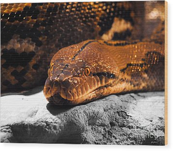 Boa Constrictor Wood Print by Jai Johnson