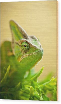 Bob The Chameleon  Wood Print by Samuel Whitton