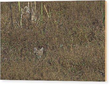 Bobcat - 5677 Wood Print