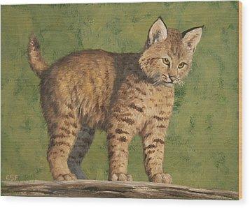 Bobcat Kitten Wood Print by Crista Forest