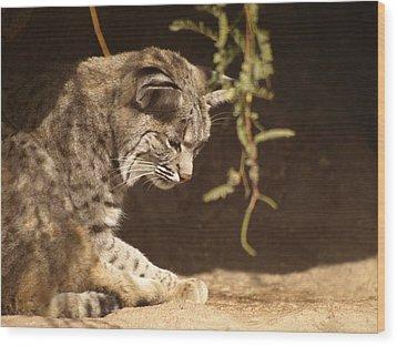 Bobcat Wood Print by James Peterson